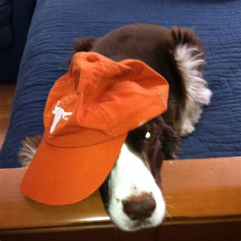 Longhorn Pillow Pet by 17 Best Images About Longhorn Pets On Horns