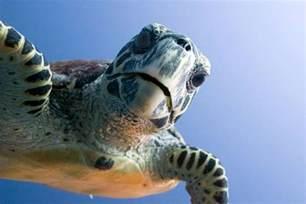 Turtle Night Light Tybee Island Sea Turtle Project