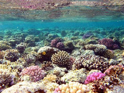 Batu Gambar Koral Otak Brain Coral terumbu karang selamatkan terumbu karang untuk generasi