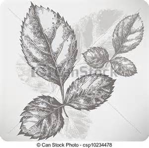 vectors illustration of twig with leaves of roses hand