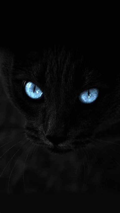 wallpaper iphone 6 cat wallpaper iphone 6 plus cat blue eyes 5 5 inches