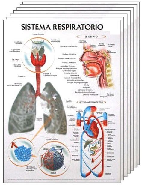 imagenes de laminas escolares tecnoedu lminas para medicina biologa y qumica