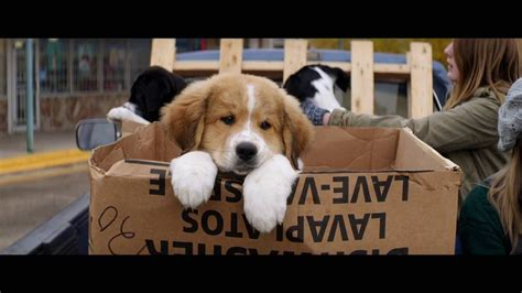 the dogs purpose a s purpose 2017 official trailer dennis quaid britt robertson