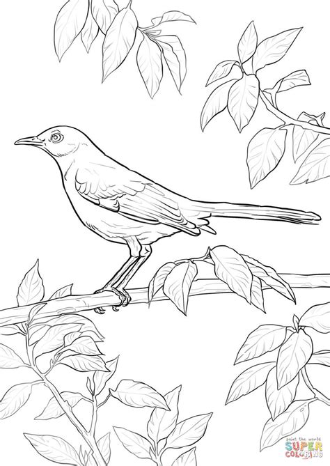 mockingbird coloring pages northern mockingbird coloring page free printable