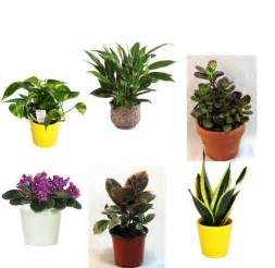 Small Plants For The Desk Best Plants For The Office Popsugar Smart Living