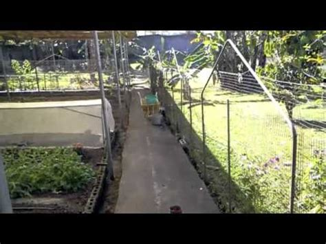 eco backyard farm organic farming in the philippines welcome to the eco