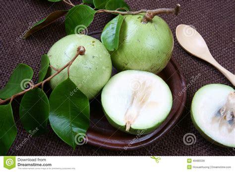 apple vietnam vietnam farm product milk fruit star apple stock image