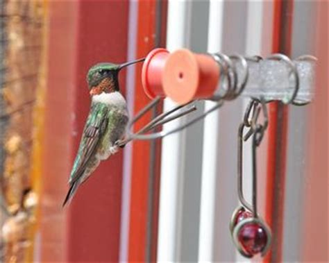 oh no ants at my window hummingbird feeder the zen