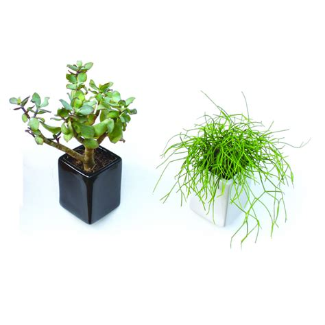 wall pots homeware furniture  gifts mocha