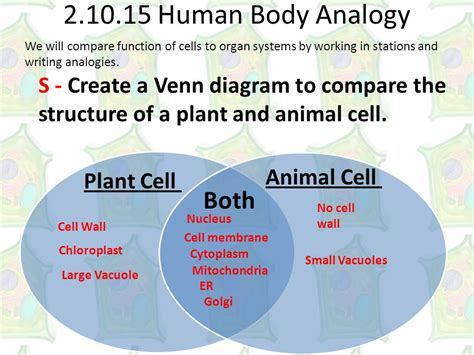comparing plant and animal cells venn diagram plant to animal edu objective students will differentiate