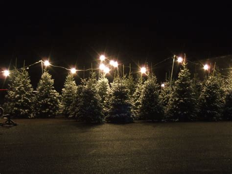 christmas tree lot 3 by parkins73 on deviantart