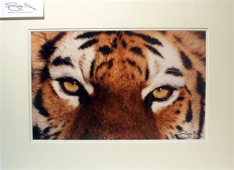 printable tiger eyes pagesitename