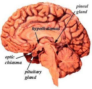 How To Detox Pineal Gland by 34 Best The Pineal Gland Images On Pineal