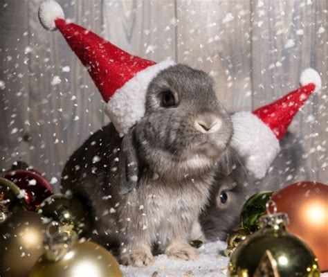 images of christmas rabbits merry christmas photography abstract background