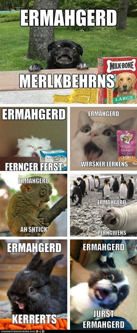 Animal Advice Meme - animal memes ermahgerd erll the ernuhmurls rub mint