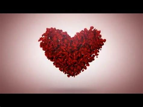 Valentine Day With Rose Petals After Effects Template Youtube Falling Flower Petals After Effects Template Free