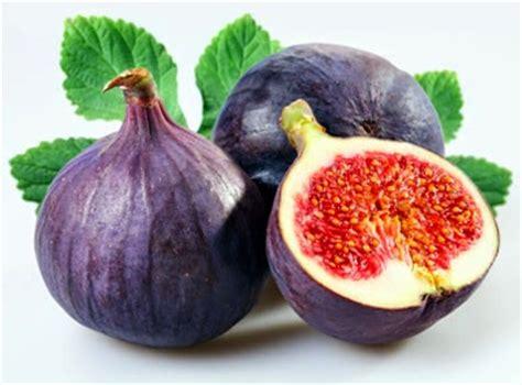 Bibit Buah Tin Dan Zaitun info tentang buah tin zaitun
