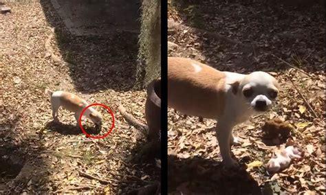 impactantes imagenes de una antigua realidad una perra entierra su cachorro muerto video impactante