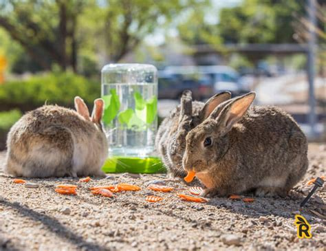vegetables bunnies can eat what fresh food can rabbits eat