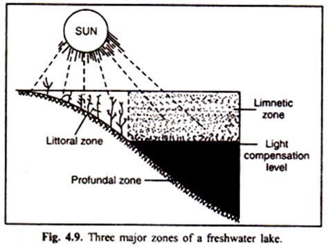the biology of lakes and ponds biology of habitats series books 3 major zones of a freshwater lake with diagram