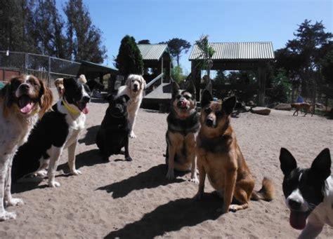 puppy daycare sf two rock ranch boarding sonoma marin county san francisco