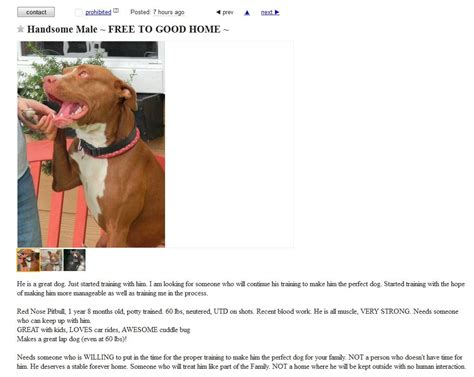free dogs on craigslist beware of free to home classified ads kron4