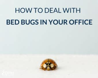 how to deal with bed bugs how to deal with bed bugs 28 images how to avoid and