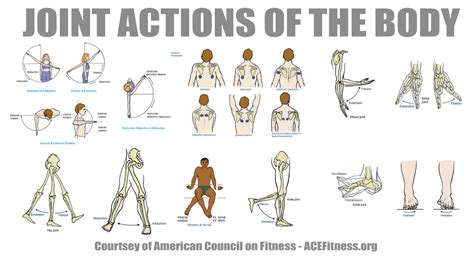 bench press muscles and joints used synergistic training improve mobility stability and