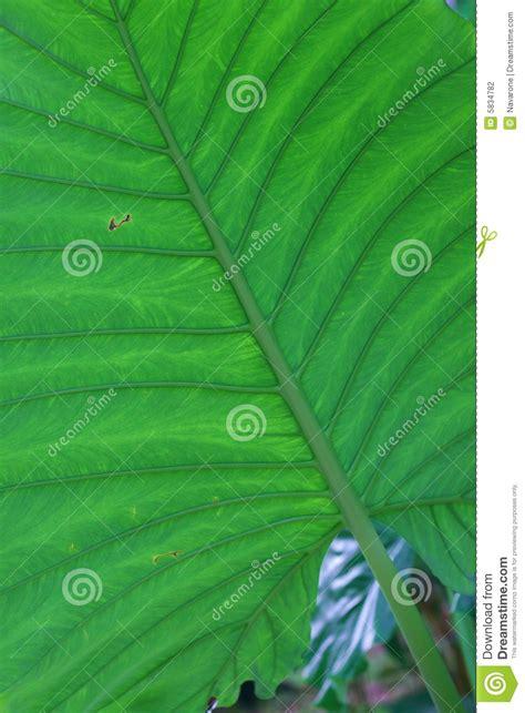 leaf pattern photography leaf pattern stock photography image 5834782