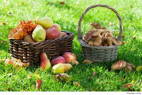 Pilze Im Eigenen Garten Züchten by Rund Um Rosenbogen Und Rankhilfe