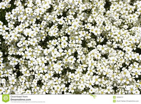 small tiny little white flower stock image image 16358721