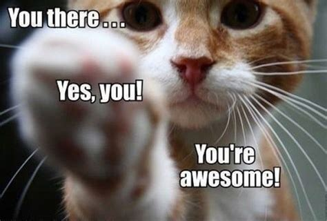Your Awesome Meme - we ve just passed a major milestone thank you all