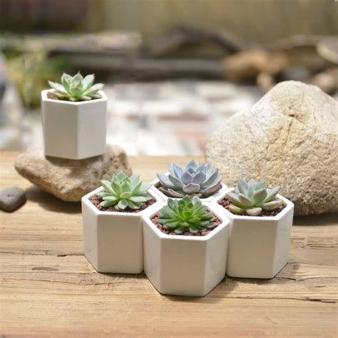 mini succulent planters hexagon mini planter choice of succulent or cacti by