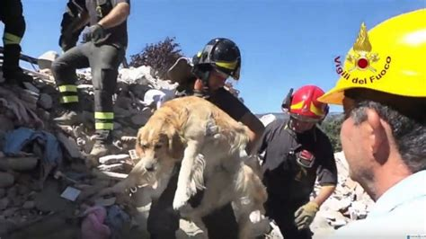 puppies rescued in italy romeo the found alive after being rescued from earthquake rubble in italy after 9