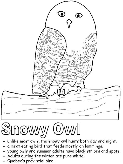 1000 Ideas About Owl Coloring Pages On Pinterest Snow Owl Coloring