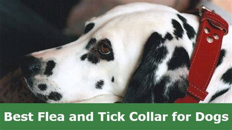 best tick collar for dogs 8 best flea and tick collar for dogs that protects and repels