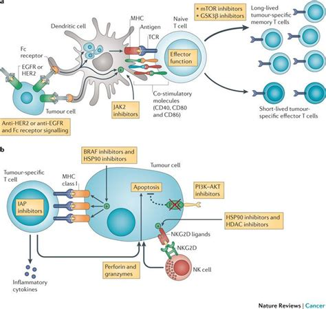 targeting pattern recognition receptors in cancer immunotherapy 25 best cytokines images on pinterest cancer metabolism