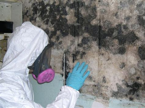 how to interpret lab results from mold sling mold removal ottawa