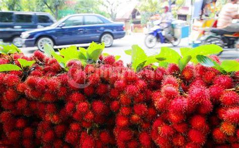 Benih Rambutan Binjai situs keselek biji rambutan siwa sd ini
