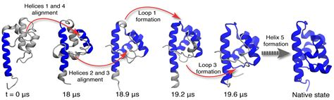 protein folding protein unfolding