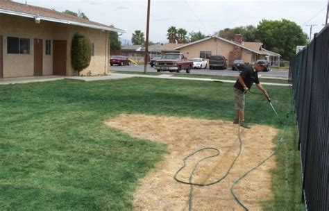 spray paint your lawn green californians pay to their lawns spray painted green