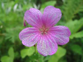 Flower Plants India - stones and flowers beautiful flowers of india