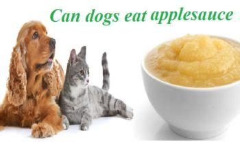 can dogs applesauce can dogs eat ham reason you should not give ham to dogs