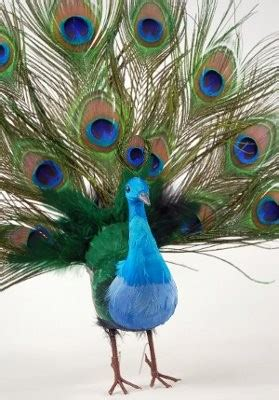 peacock feather christmas trees for sale aisle decorations weddings wedding forums weddingwire
