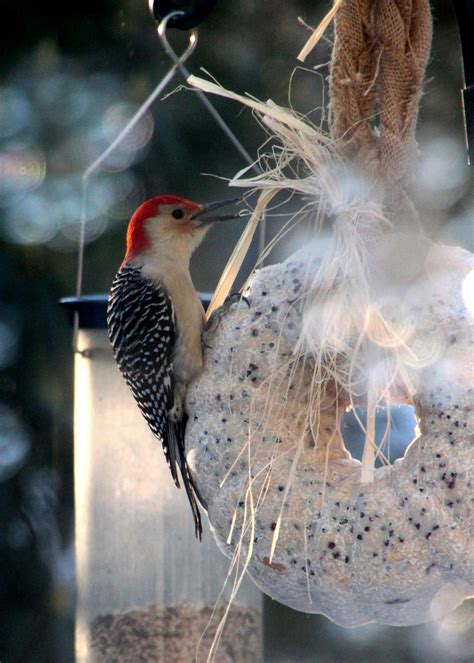 create a suet birdseed wreath how tos diy