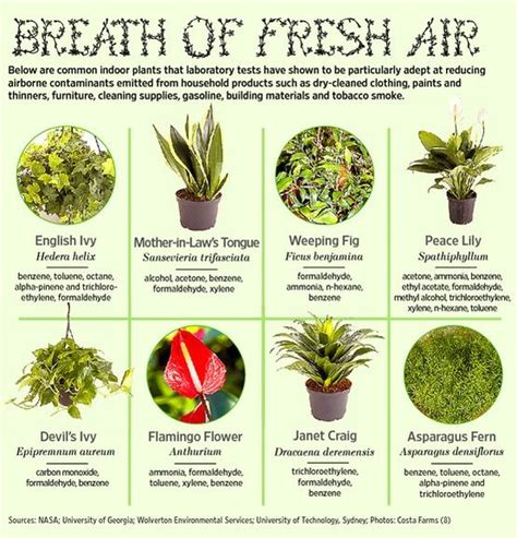 common house plants uk common indoor plants that improve air quality diy to do list plants air plants