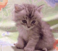 sleepy gif sleepy kitten gifs find on giphy