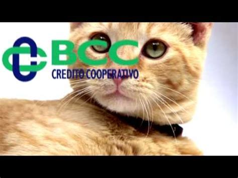 di credito cooperativo vicentino le banche di credito cooperativo vicentine fanno scendere