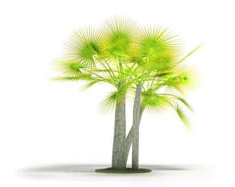 lime green palm tree 3d model cgtrader com