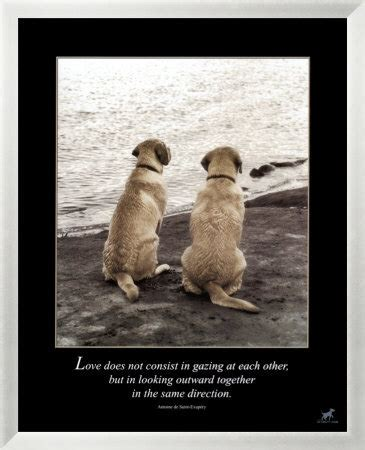 poems about dogs dying quotes about dogs dying quotes